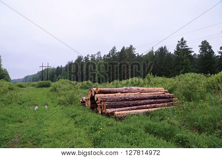 pile of logs in forest summer cloudy