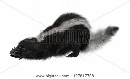 3D Rendering Skunk On White