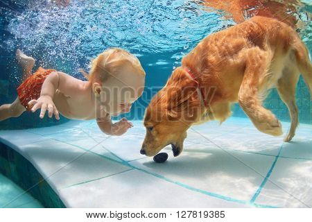Funny little child play with fun and train golden labrador retriever puppy in swimming pool jump and dive deep down underwater. Active water games with family pets popular dog breeds like companion.