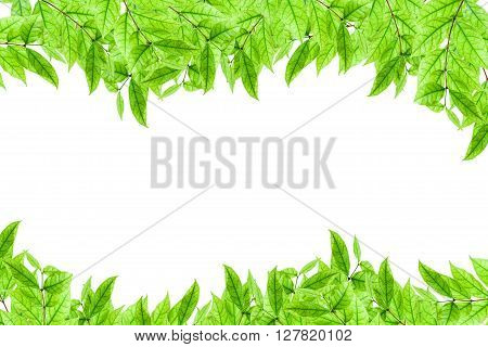 Fresh young green plant and leaf frame on white background
