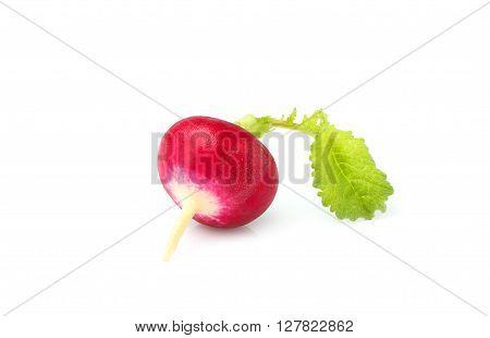 Small fresh red radish isolated on white background.