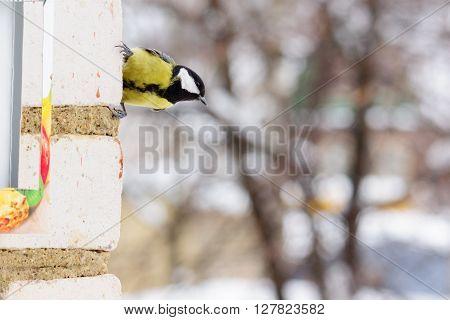tit bird sitting on the brick wall winter