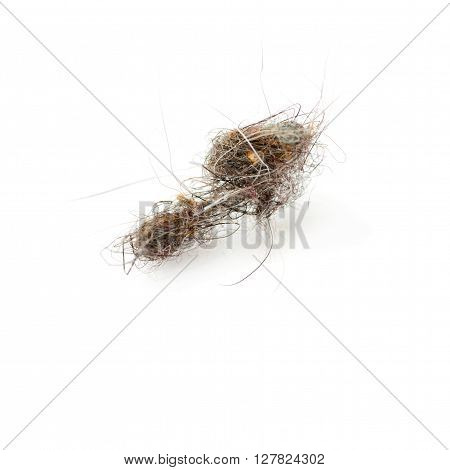 Ball dust of hairs isolated over the white background, macro