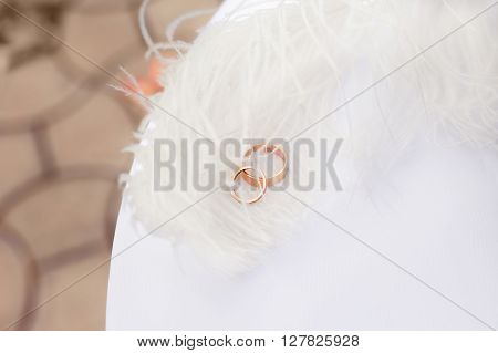 Gold wedding rings nestling in white feathers. Wedding ceremony colorful photo