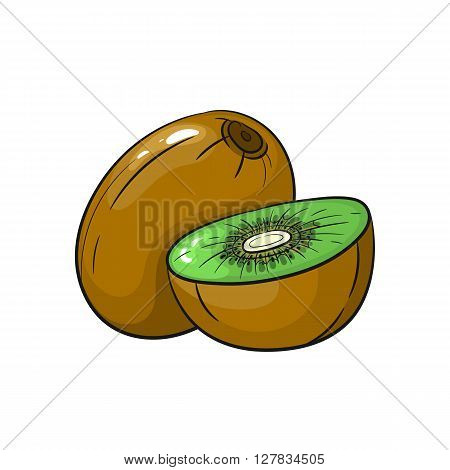 Vector kiwi illustration. Slice of kiwi, kiwi isolated on white background. Vector sketch hand drawn fruit - stock vector