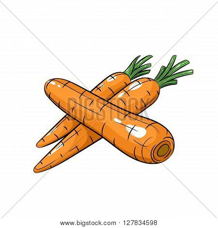 Vector carrot illustration. Carrot isolated on white background. Vector sketch hand drawn - stock vector