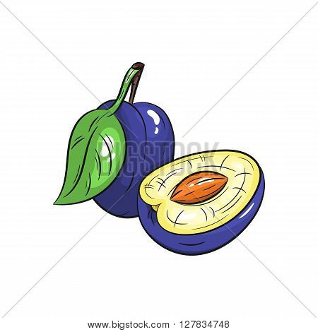 Vector plum illustration. Slice of plum, plum isolated on white background. Vector sketch hand drawn fruit - stock vector