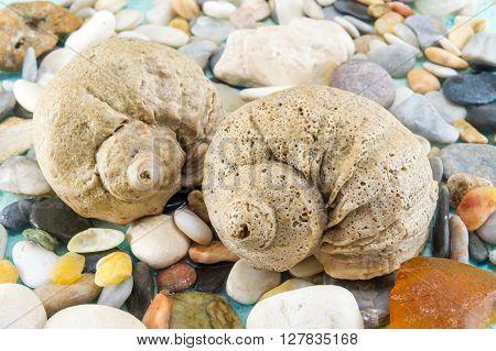 Interesting Seashells Close Up