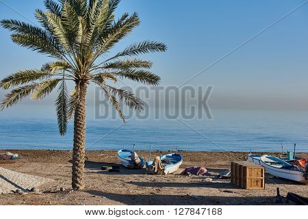 Azaibah Beach , Muscat Oman 31st January 2015. Fishing Boats hauled up the beach next to a palm tree early in the morning.