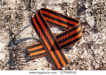 May 9: St. George ribbon on the background of birch bark