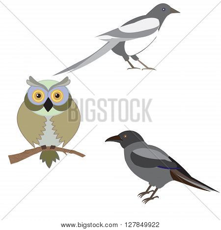 Vector illustration of a set of images of birds illustration birds - magpie crow owl card design flyers leaflets postcards