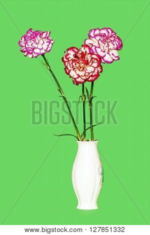 Three Cloves In Vase