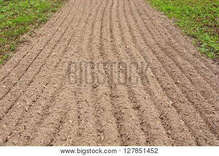 Arable land dug up for planting straight strip