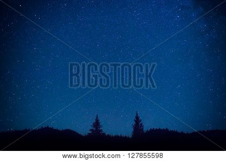 Dark Blue Night Sky Above The Mistery Forest