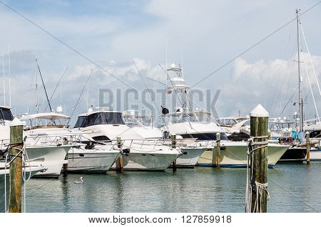Many Large Fishing Boats in Tampa Marina