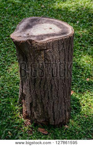 Old Wooden Stump.