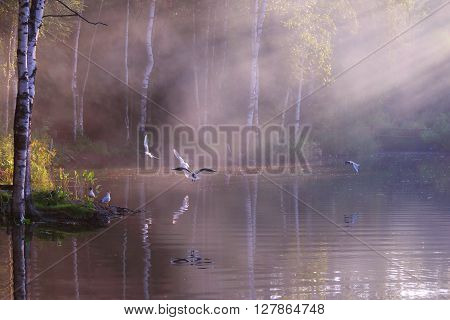 Beautiful lake with white seagulls steam above water and sunlight ** Note: Soft Focus at 100%, best at smaller sizes