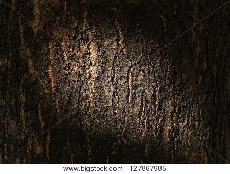 dry tree bark texture background closeup, wood texture