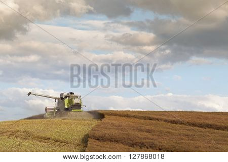The Combine Harvester in Action, on the Top of Hilly Rapeseed Field