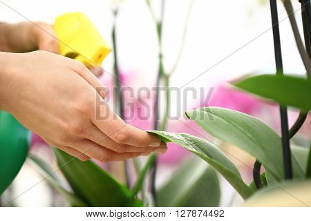 Woman hands with sprayer sprayed on flower leaves take care of the garden