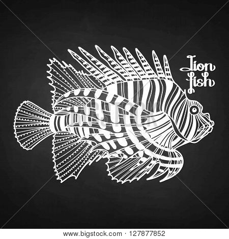 Graphic vector lion fish isolated on chalkboard. Sea and ocean creature in black and white colors