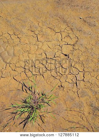 Dry Cracked Clay Of Wheat Field. Dusty Cracked Ground