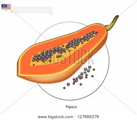 Malaysia Fruit Illustration of Ripe Papaya. One of The Most Popular Fruits in Malaysia.
