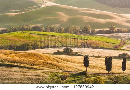 Tuscan Summer Landscape with Cypress Trees at Sunset