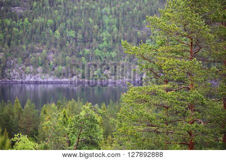 Tinnsja Lake, Norway