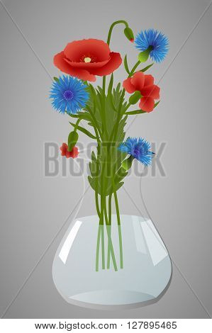 Bouquet of poppies and cornflowers in a clear vase on gray background, vector illustration