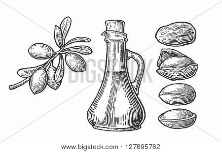 Set of isolated argan branches leaves nuts. For packing oil creams. Vector vintage engraved illustration isolated on white background
