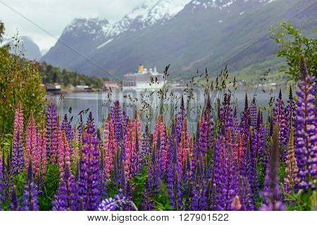 mountain landscape with cruise ship and pink lupine norway
