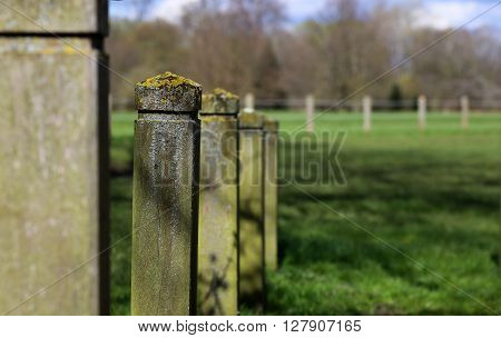 Lichen Covering Wooden Fence Posts