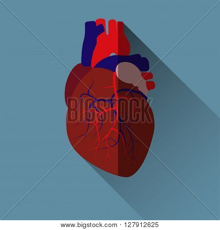Human heart sign, flat design icon with long shadow, vector