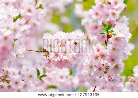 Pink Blossoming Flowers