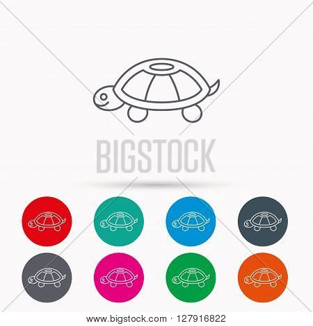Turtle icon. Tortoise sign. Tortoiseshell symbol. Linear icons in circles on white background.