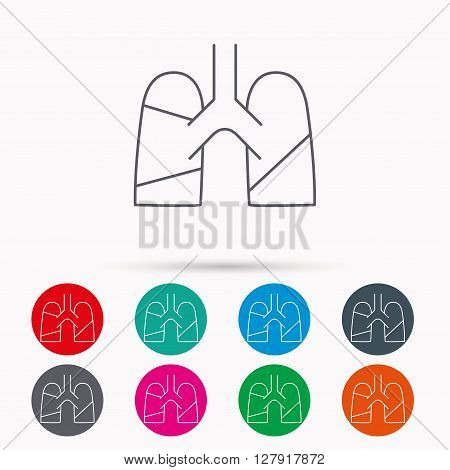 Lungs icon. Transplantation organ sign. Pulmology symbol. Linear icons in circles on white background.