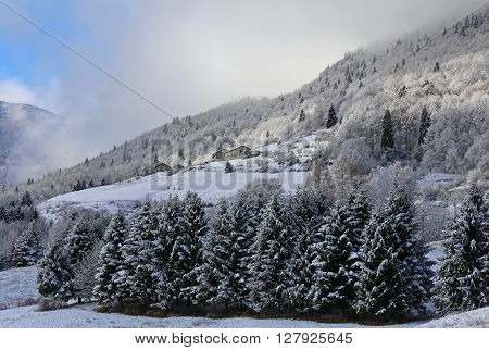 mountain landscape with fir pine submerged by snow in winter