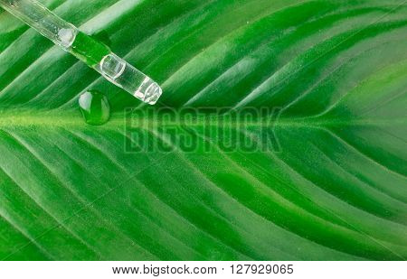 Means to combat plant pests. Green leaf with a drop of funds to combat plant pests closeup