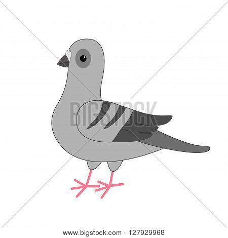 Dove bird. Gray Pigeon Cute cartoon character on white background. Isolated. Pigeon icon Flat design Vector illustration