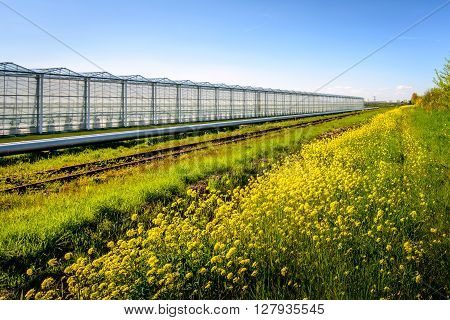 Large Dutch greenhouse on a sunny day in spring. The reflecting silver colored pipes with hot water from a nearby power plant are used to heat the greenhouse.
