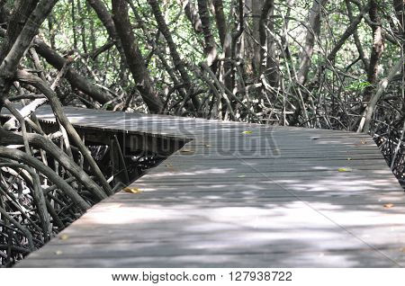 boardwalk in the mangrove forest lonely and haunted