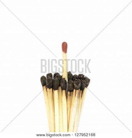 Red matchstick among a bundle of burnt ones. Uniqueness and standing out from the crowd concept
