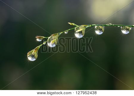 Fresh grass with dew drops and Sun beams close up
