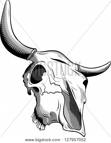 vector animal skull isolated on the white