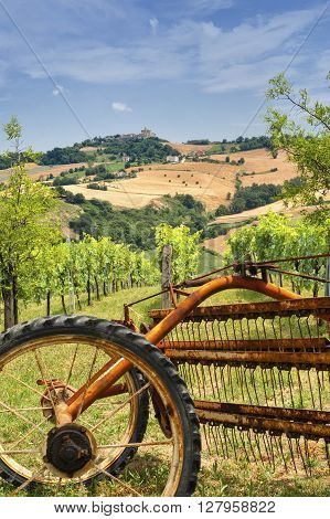 Country landscape in Marches (Italy) at summer with vineyard and a plow in foreground