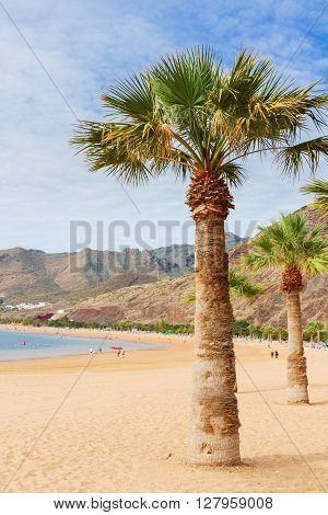 view of beach Las Teresitas with palm  at sunny summer day, Tenerife island, Canarias Spain