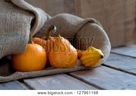 Pumkins and jute poke on wooden boards