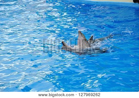 on vacation in the summer , in the dolphinarium , dolphin