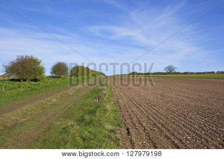 a country footpath on the yorkshire wolds england in springtime with flowering crops and plowed soil under a blue sky